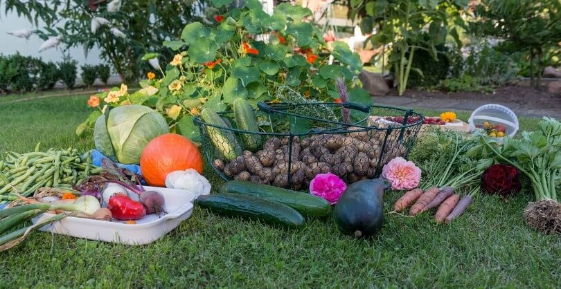 Best Crops For Fall Gardening
