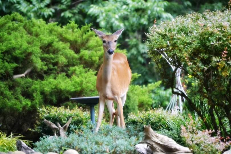 Keep Deer Animals Out Of Garden